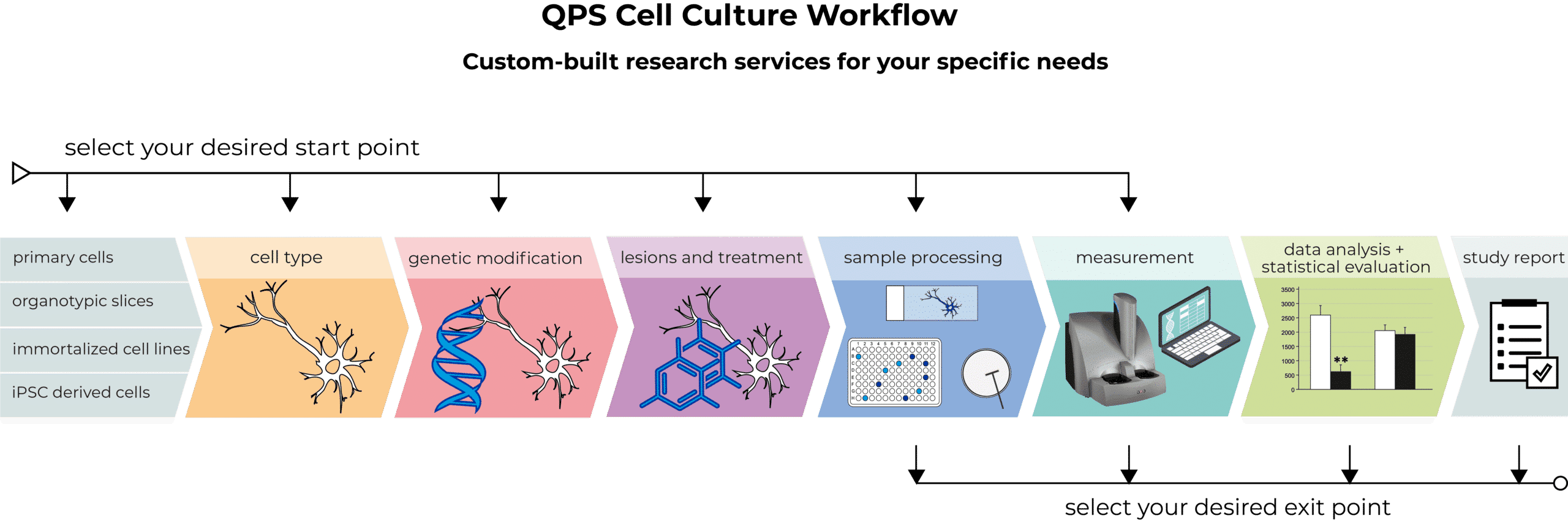 Cellculture-workflow