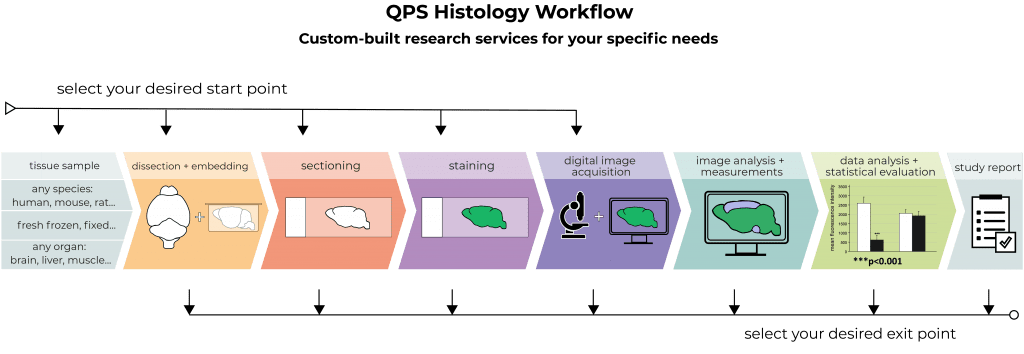 QPS-Histology-Workflow